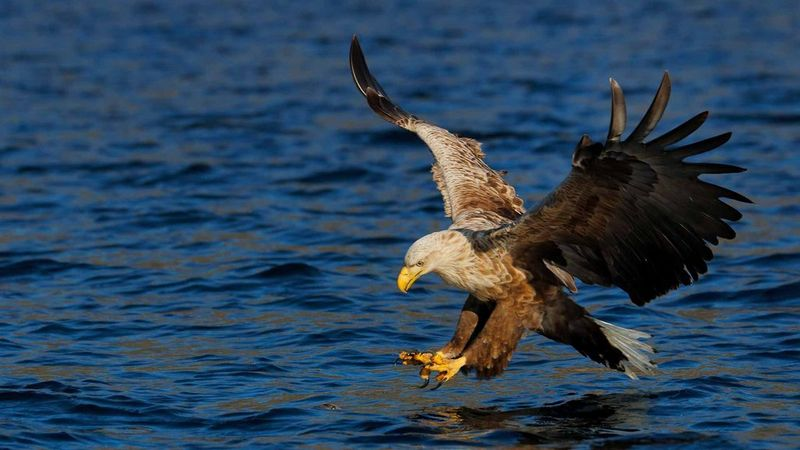 Wildlife eagle sea